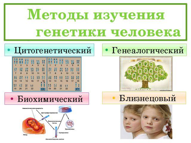 Методы изучения   генетики человека Генеалогический Цитогенетический Близ...