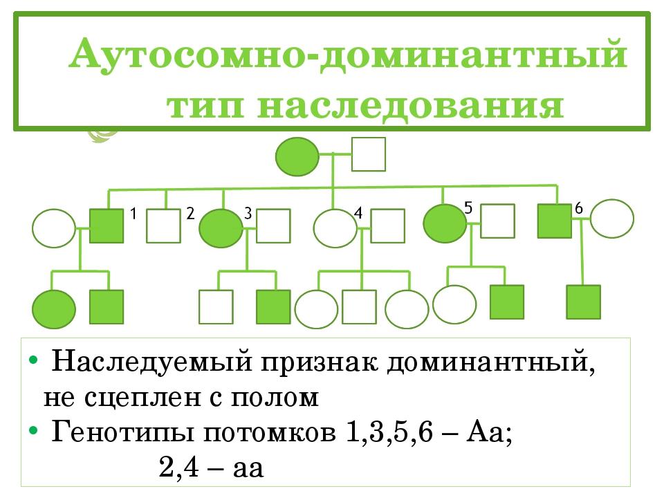 Аутосомно-доминантный тип наследования Наследуемый признак доминантный, н...