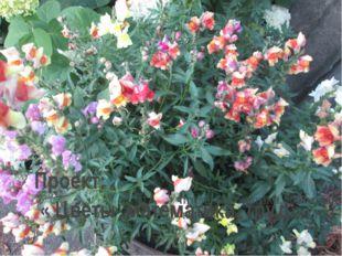 Проект: « Цветы ,математика, труд» Учитель математики, классный руководитель