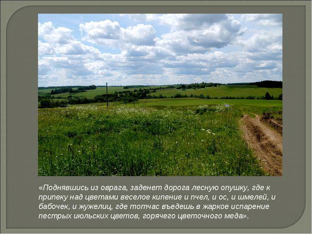 «Поднявшись из оврага, заденет дорога лесную опушку, где к припеку над цветам...