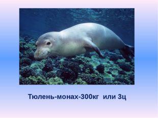 Тюлень-монах-300кг или 3ц
