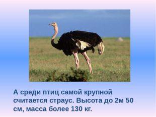 А среди птиц самой крупной считается страус. Высота до 2м 50 см, масса более