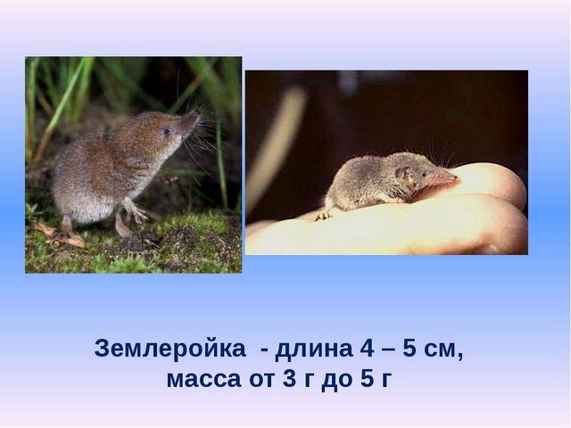 Землеройка - длина 4 – 5 см, масса от 3 г до 5 г