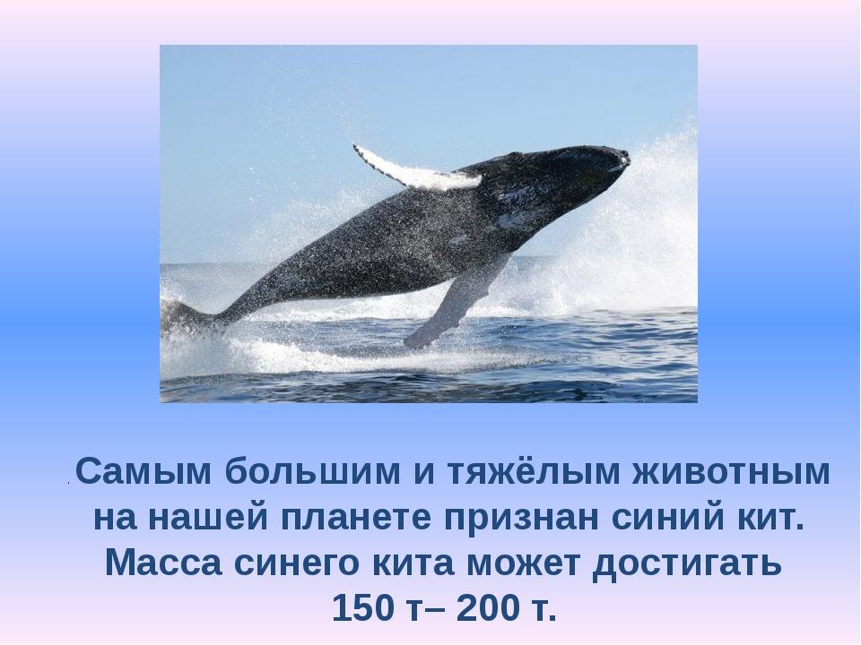 . Самым большим и тяжёлым животным на нашей планете признан синий кит. Масса...