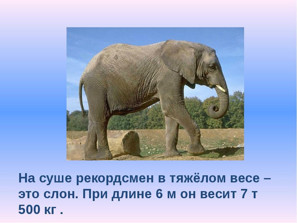 На суше рекордсмен в тяжёлом весе – это слон. При длине 6 м он весит 7 т 500...