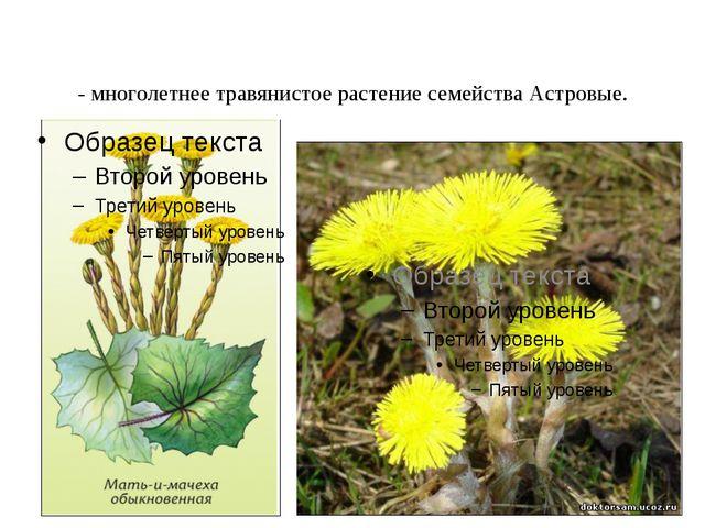 Ма́ть-и-ма́чеха - многолетнее травянистое растение семейства Астровые.