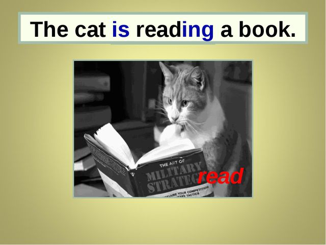 the cat The cat is reading a book. read