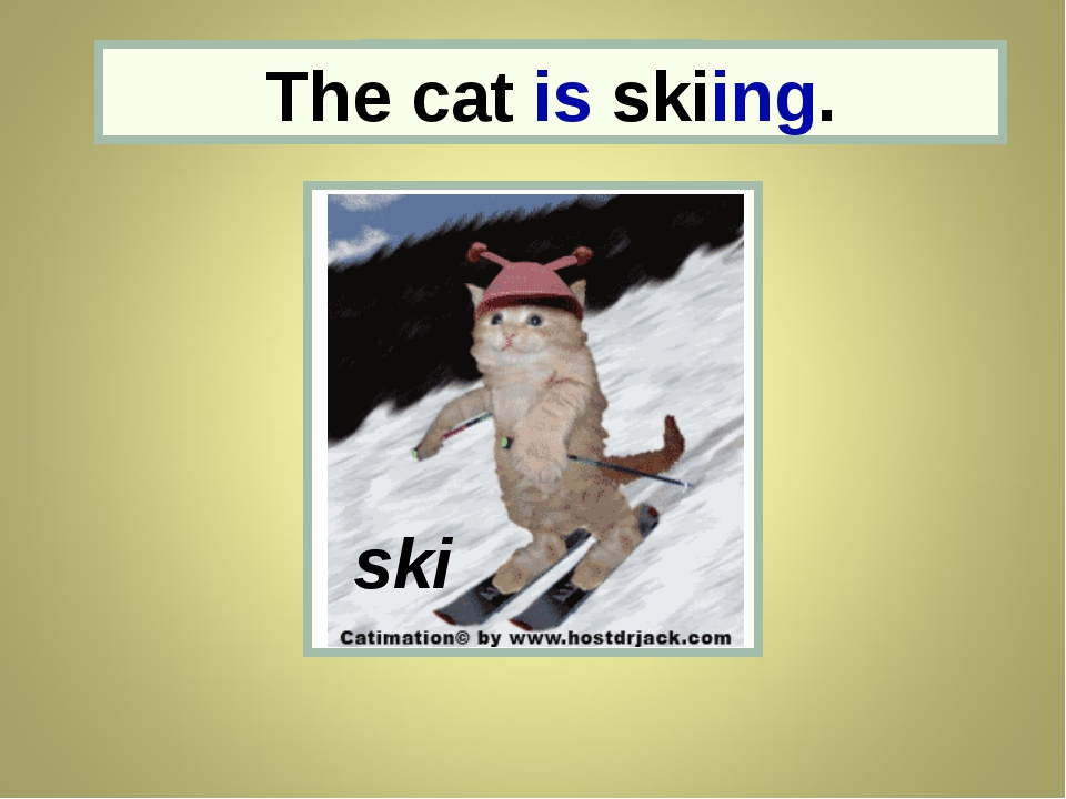 the cat The cat is skiing. ski