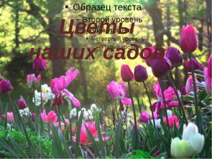 Цветы наших садов