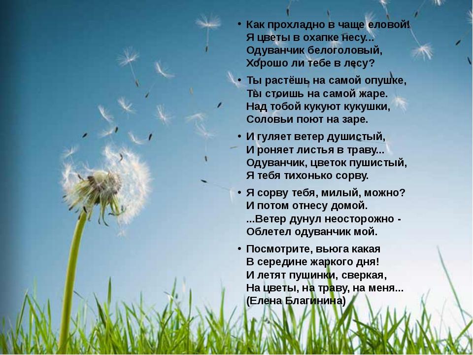 Как прохладно в чаще еловой! Я цветы в охапке несу... Одуванчик белоголовый,...