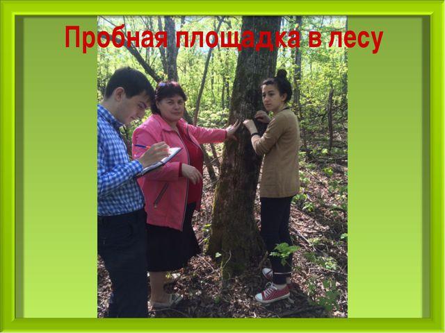 Пробная площадка в лесу