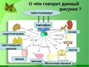 О чём говорит данный рисунок ? надпочечники гипофиз Щитовидная железа почки