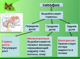 гипофиз Вырабатывает гормоны Передняя доля Средняя доля Задняя доля Гормон ро
