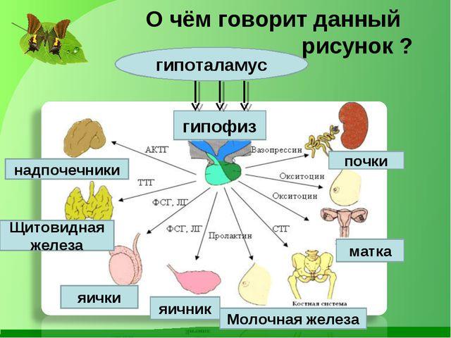 О чём говорит данный рисунок ? надпочечники гипофиз Щитовидная железа почки...