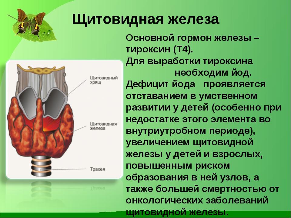 Щитовидная железа Основной гормон железы – тироксин (Т4). Для выработки тирок...
