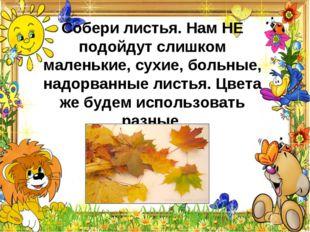 Собери листья. Нам НЕ подойдут слишком маленькие, сухие, больные, надорванные