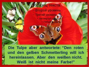 """Die Tulpe aber antwortete: """"Den roten und den gelben Schmetterling will ich"""