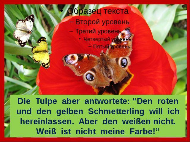 """Die Tulpe aber antwortete: """"Den roten und den gelben Schmetterling will ich..."""