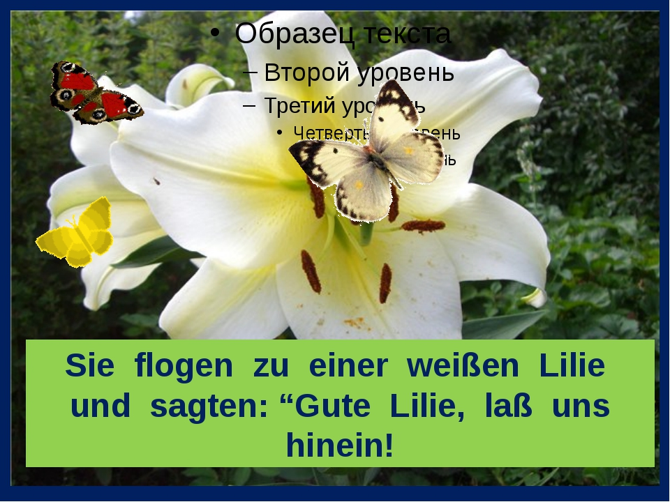 """Sie flogen zu einer weißen Lilie und sagten: """"Gute Lilie, laß uns hinein!"""