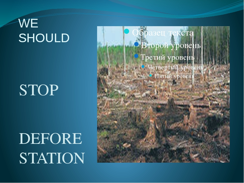 WE SHOULD STOP DEFORESTATION