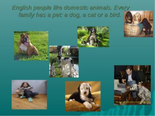 English people like domestic animals. Every family has a pet: a dog, a cat o