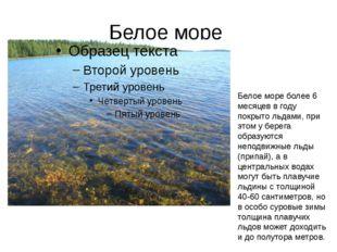 Белое море Белое море более 6 месяцев в году покрыто льдами, при этом у берег