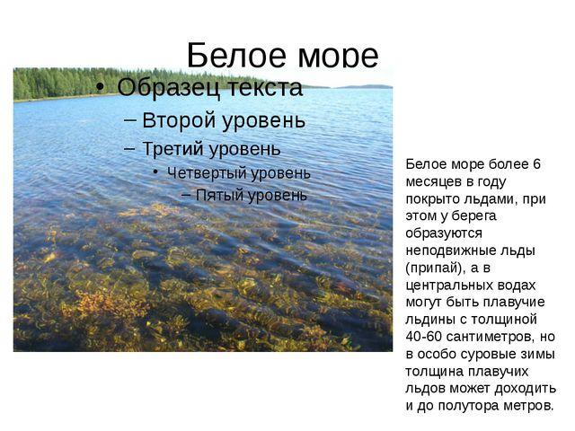 Белое море Белое море более 6 месяцев в году покрыто льдами, при этом у берег...