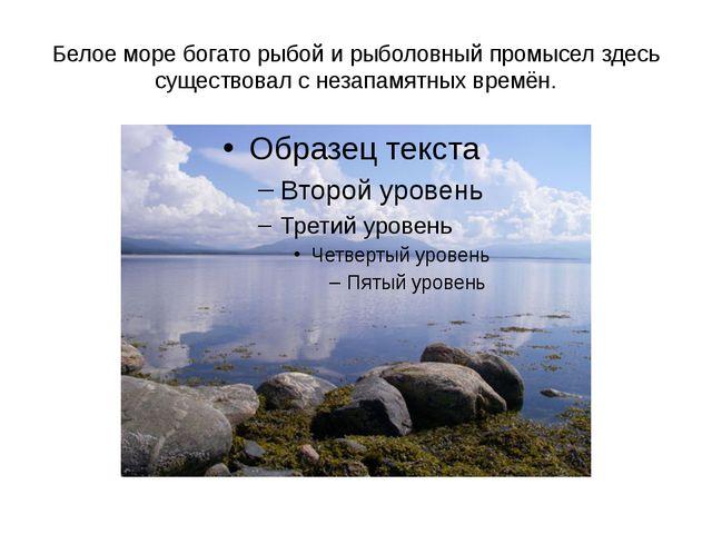 Белое море богато рыбой и рыболовный промысел здесь существовал с незапамятны...