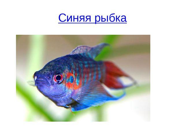 Синяя рыбка