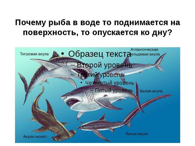 Почему рыба в воде то поднимается на поверхность, то опускается ко дну?