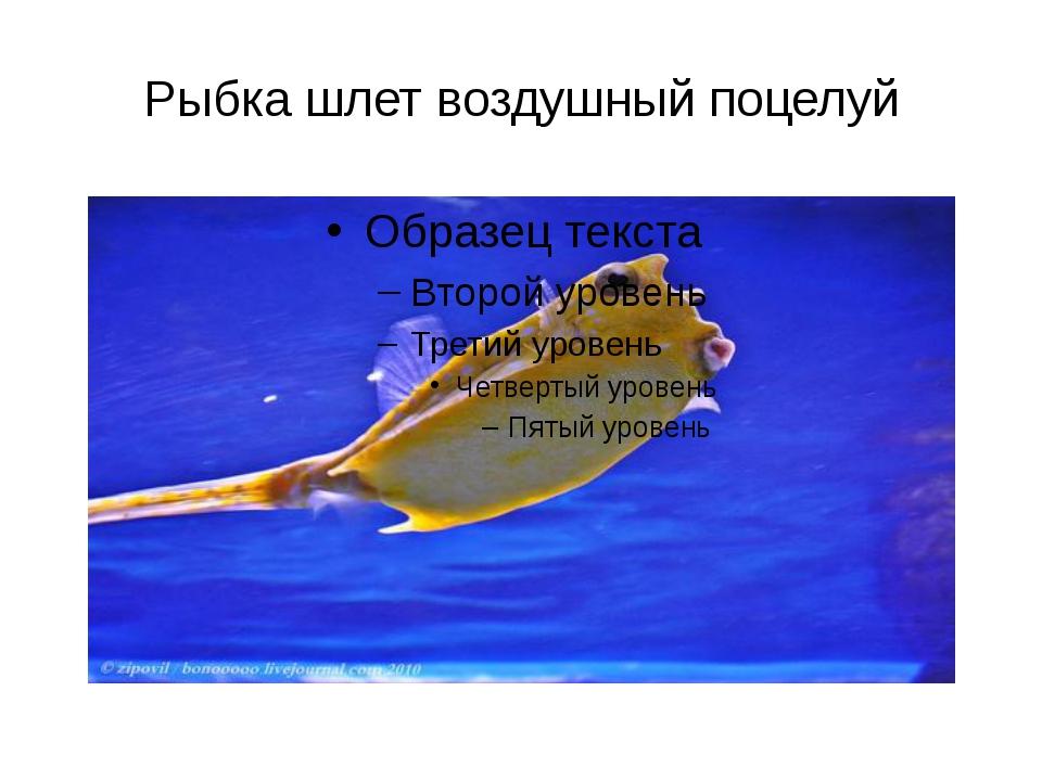 Рыбка шлет воздушный поцелуй