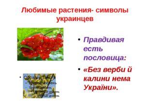 Любимые растения- символы украинцев Правдивая есть пословица: «Без верби й ка