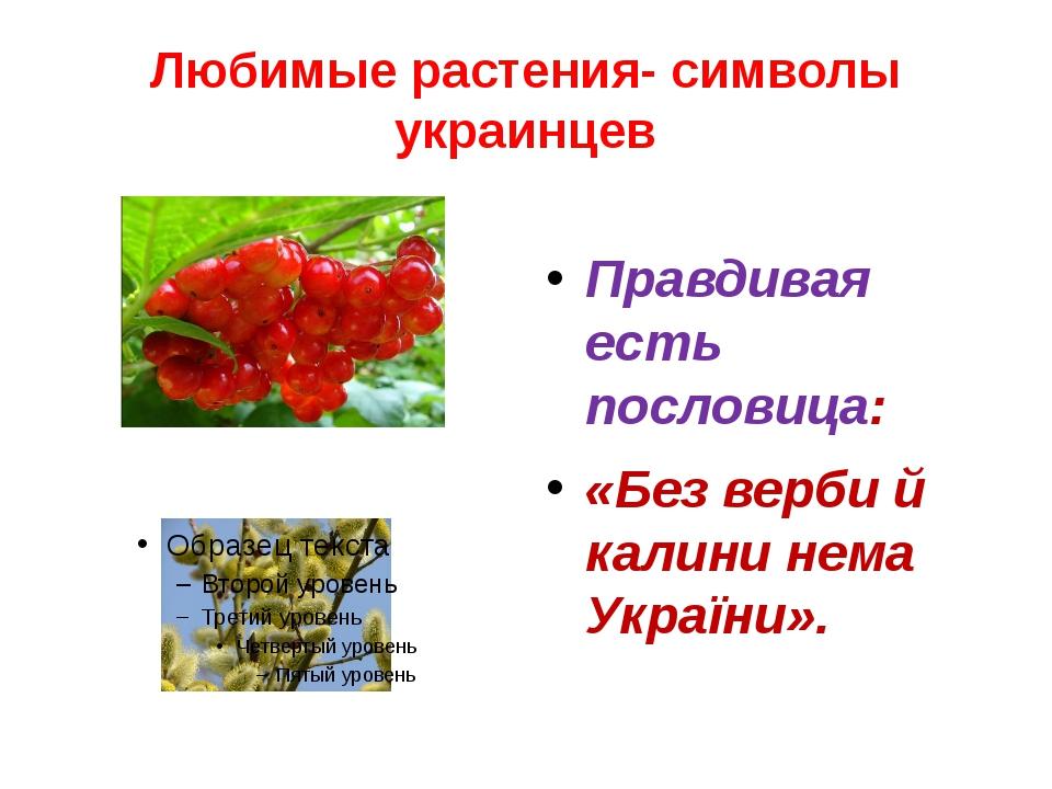 Любимые растения- символы украинцев Правдивая есть пословица: «Без верби й ка...