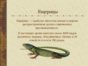 Ящерицы Ящерицы — наиболее многочисленная и широко распространенная группа со
