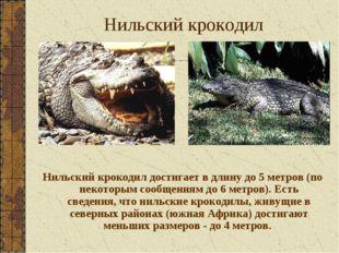 Нильский крокодил Нильский крокодил достигает в длину до 5 метров (по некотор