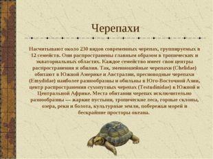 Черепахи Насчитывают около 230 видов современных черепах, группируемых в 12 с