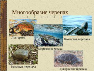 Многообразие черепах Логгерхед Кожистая черепаха Морская черепаха Болотная че