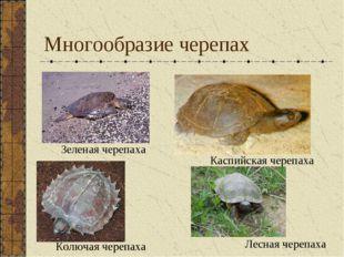 Многообразие черепах Зеленая черепаха Каспийская черепаха Колючая черепаха Ле