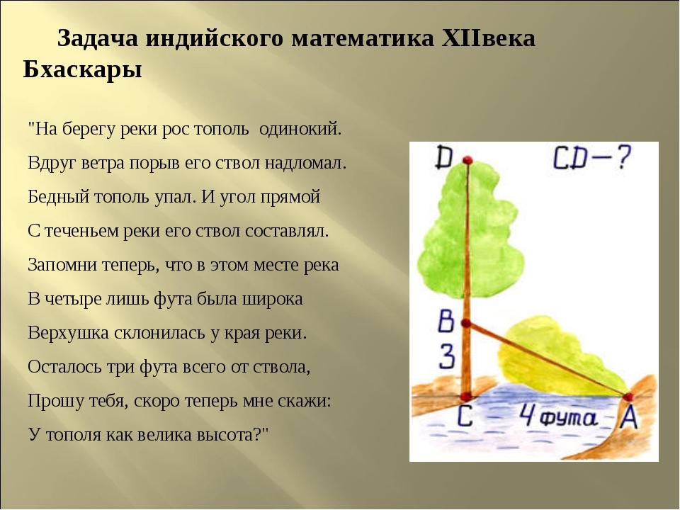 """Задача индийского математика XIIвека Бхаскары """"На берегу реки рос тополь оди..."""