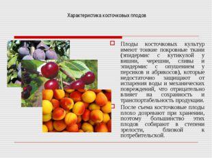 Характеристика косточковых плодов Плоды косточковых культур имеют тонкие покр