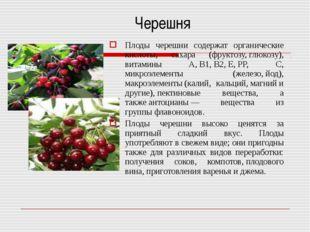 Черешня Плоды черешни содержат органические кислоты, сахара (фруктозу,глюко