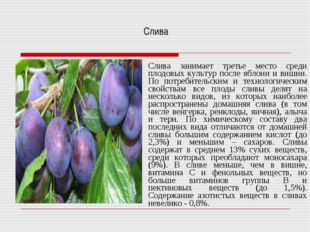 Слива Слива занимает третье место среди плодовых культур после яблони и вишн
