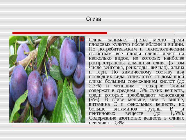 Слива Слива занимает третье место среди плодовых культур после яблони и вишн...