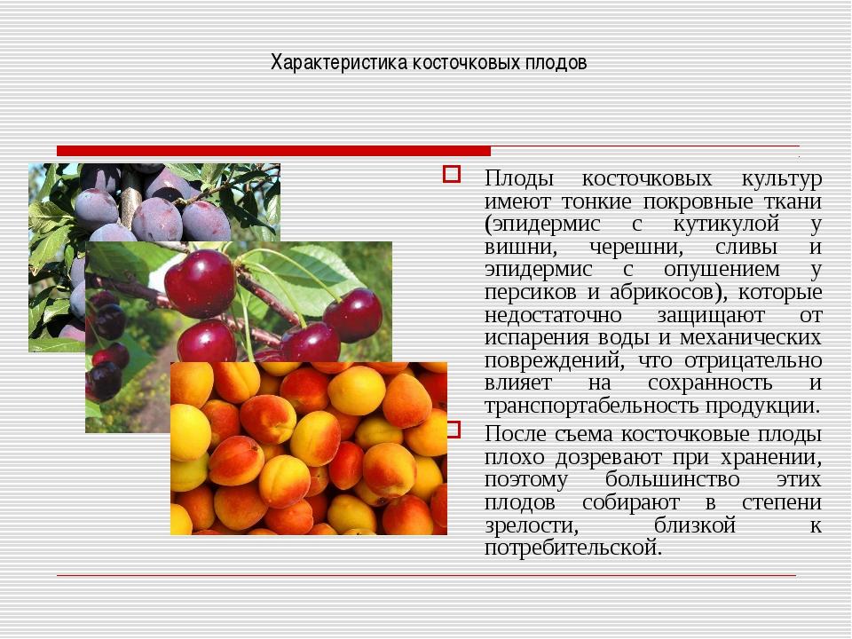 Характеристика косточковых плодов Плоды косточковых культур имеют тонкие покр...