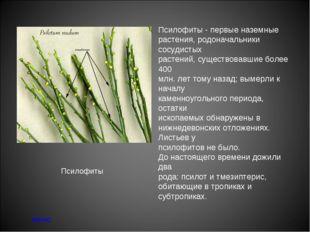 Псилофиты - первые наземные растения, родоначальники сосудистых растений, сущ