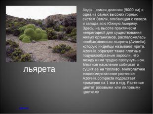 льярета меню Анды - самая длинная (9000 км) и одна из самых высоких горных си