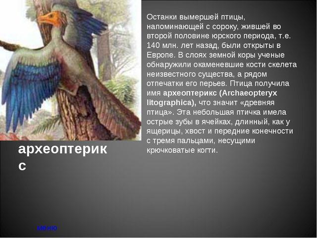 археоптерикс меню Останки вымершей птицы, напоминающей с сороку, жившей во вт...