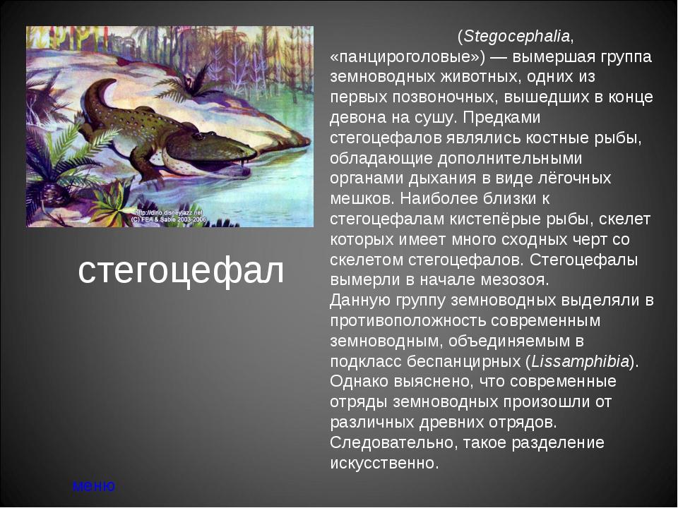 стегоцефал меню Стегоцефа́лы (Stegocephalia, «панцироголовые»)— вымершая гру...