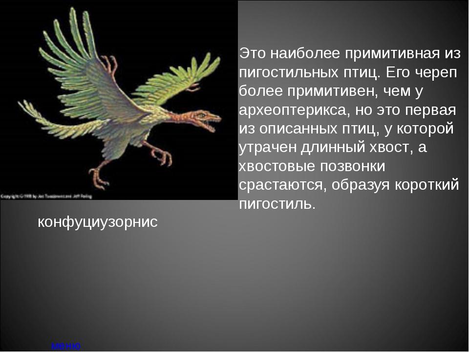 конфуциузорнис меню Это наиболее примитивная из пигостильных птиц. Его череп...