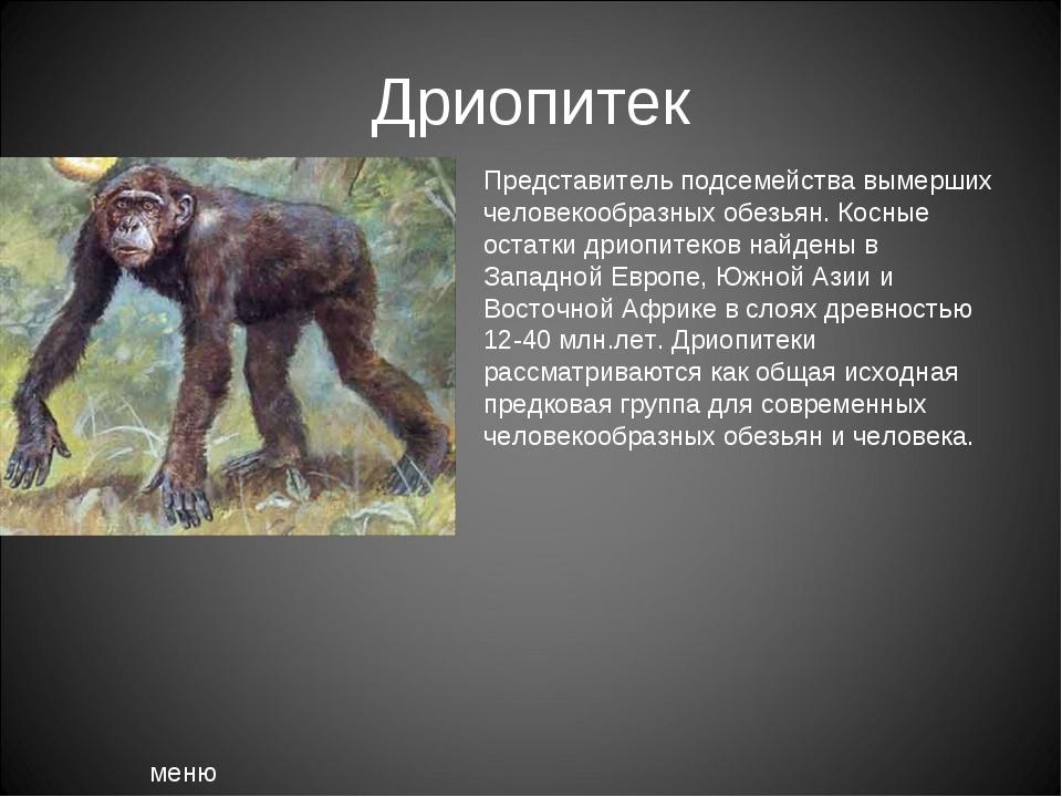 Дриопитек меню Представитель подсемейства вымерших человекообразных обезьян....